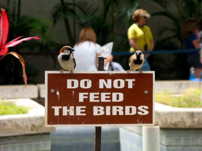 ne pas nourrir les oiseaux / do not feed the birds